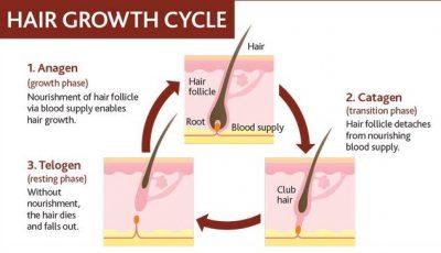 how hair grows