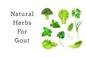 Best Herbs for Gout